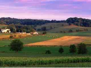 瑰丽的农场天空风景图片