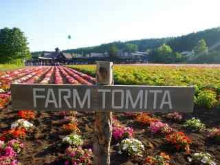 美丽的福田农场风景图片桌面壁纸