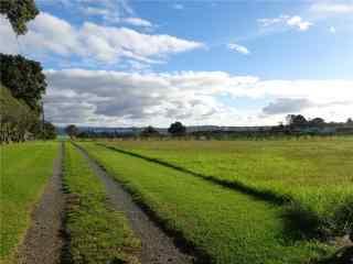 新西兰秀美的农场风景图片