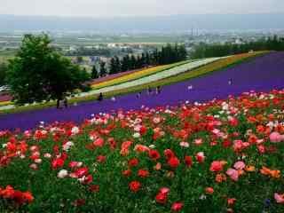 五彩缤纷的花田农场风景图片桌面壁纸