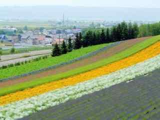 五彩的美丽农场风景图片