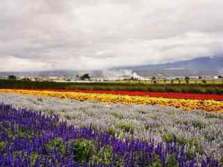 唯美的福田农场风景图片