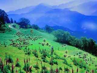 放牧农场风景图片桌面壁纸