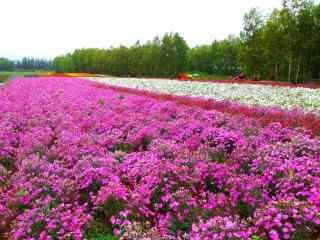 美丽的花海农场风景图片