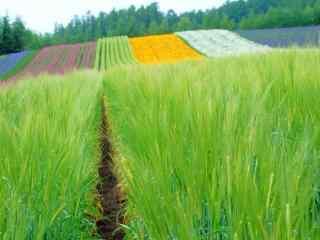 农场多彩作物风景图片
