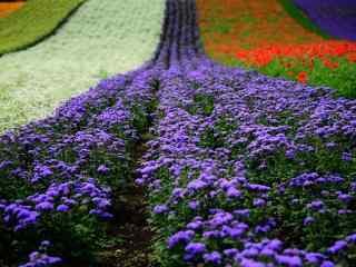 五彩美丽的福田农场图片桌面壁纸