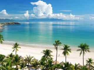 沙滩椰树超好看风