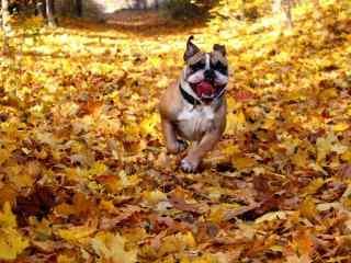 绝美落叶与狗唯美