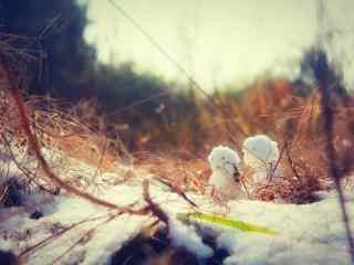 冬日森林里可爱的小雪人桌面壁纸