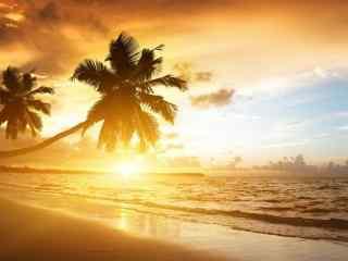 沙滩椰树超好看唯