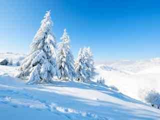 唯美雪景白色风景