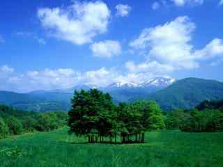 绿色护眼森林高清