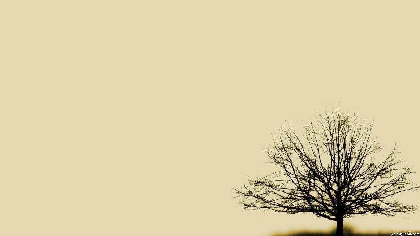 唯美树木风景图片桌面壁纸