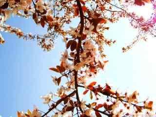 唯美花朵高清图片