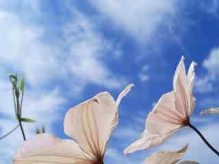 蓝天白云唯美风景