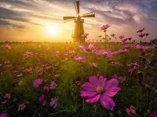 唯美的荷兰风车与