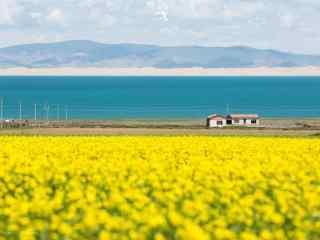 宁静的青海湖油菜花图片壁纸