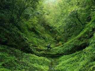 绿色小清新山谷风景图片