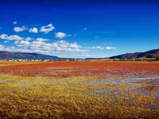 唯美草原自然风光