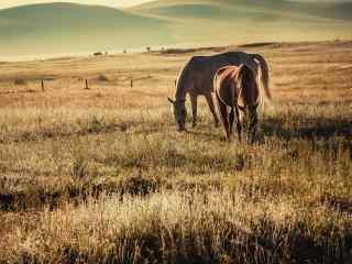 草原上的马唯美图