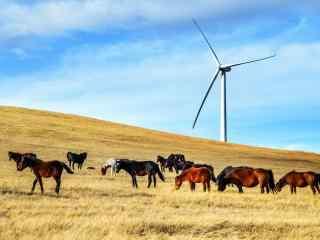 唯美草原牛羊与风