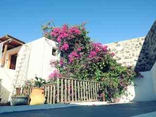 圣托里尼唯美花朵风景图片高清桌面壁纸