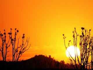 唯美夕阳下的森林风景图片