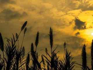 唯美稻田里的夕阳风景图片