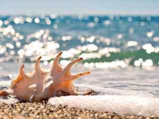 鼓浪屿海边唯美贝