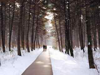 唯美东北森林小路