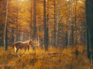 秋季唯美森林里的