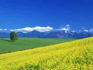 好看的小清新田园风景图片