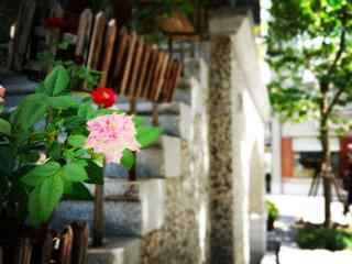 上海:思南路民国风特色风景图片