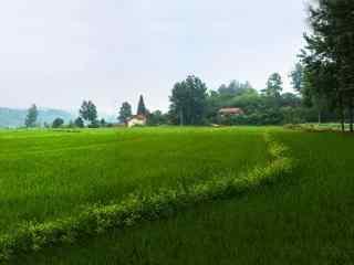 绿色小清新田园风景护眼壁纸