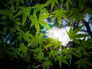 美丽森林绿色树木