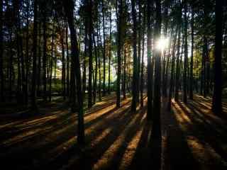 穿透树林的一缕阳