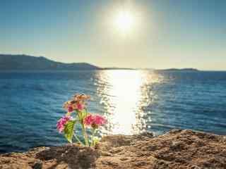 海边悬崖上的花朵