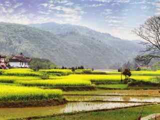 充满诗意的田园风景图片