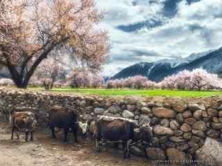 唯美清新的田园风景图片