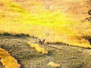 秋日丰收的田园风景图片