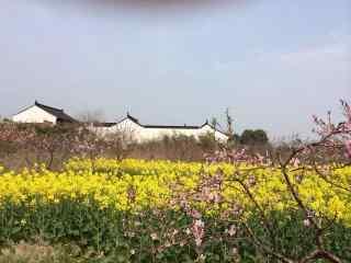 悠闲的乡村田园风光图片