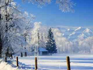 被白雪覆盖的大树唯美图片高清桌面壁纸