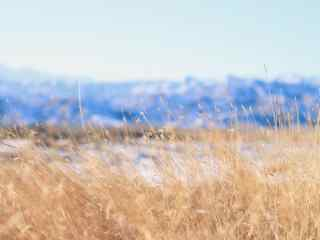 贺兰山下美丽草坪图片