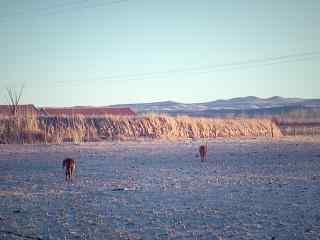 贺兰山脉特色西北风光图片