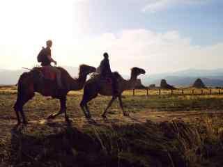 西夏王陵骑骆驼的人图片
