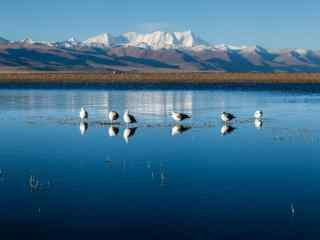 纳木错湖上的白色鸟儿图片高清桌面壁纸