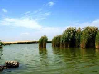 沙湖特色植物景观图片