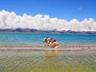 西藏圣湖纳木错湖小清新风景图片