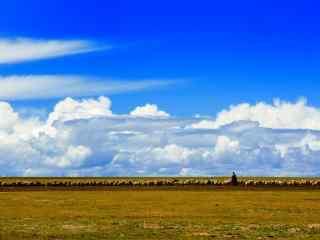 纳木错湖畔放牧的藏民图片