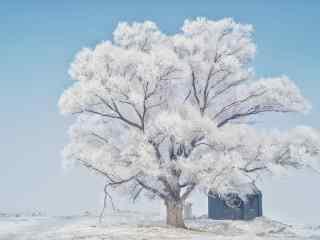 冬日里一棵银装素